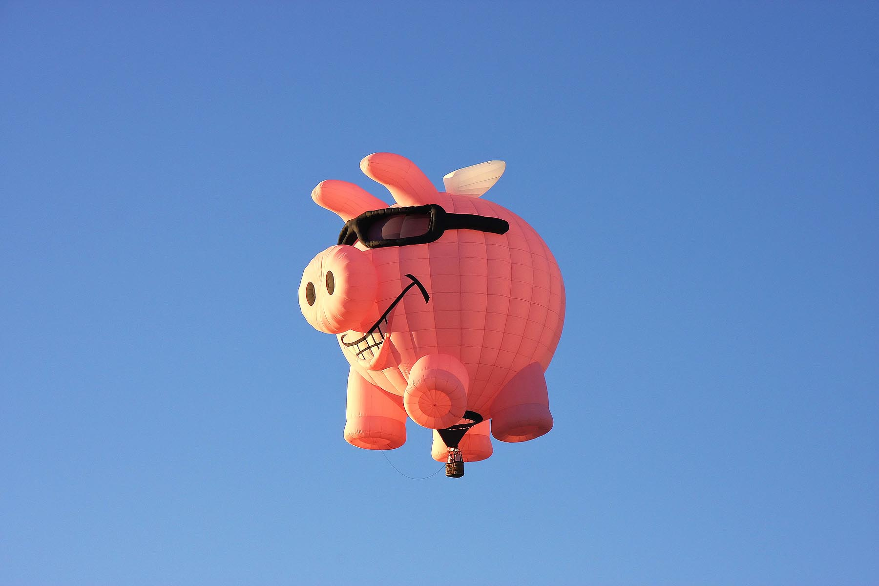 Flying Pig - Joe Myeress Photography